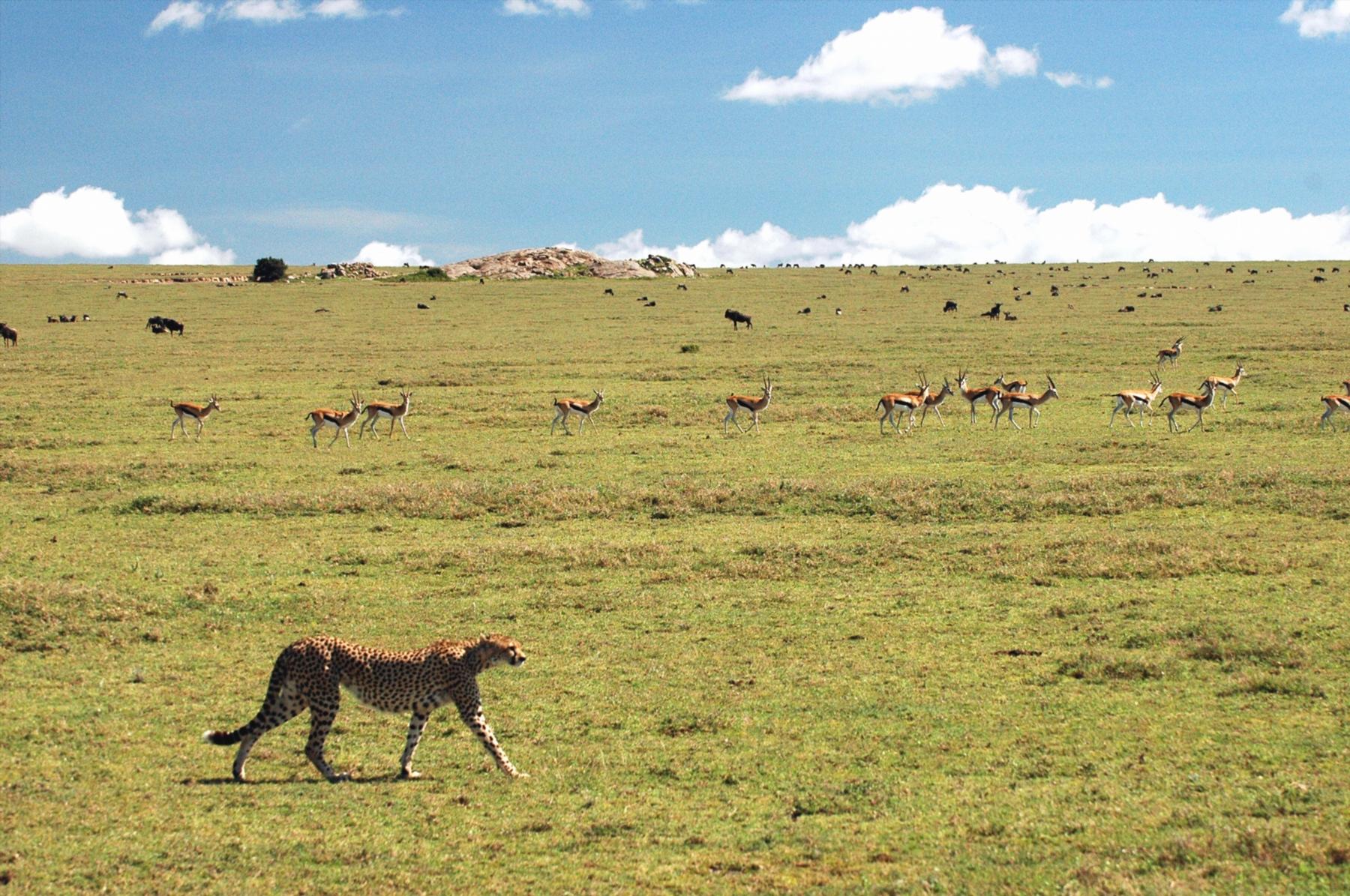 ンゴロンゴロ自然保護区 行き方